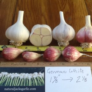 German White Seed Garlic