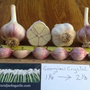 Georgian Crystal Seed Garlic