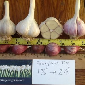 Georgian Fire Seed Garlic